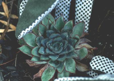 Daniel Leiritz Paysagiste - Plantation Succulente Echeveria