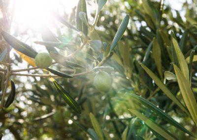 Daniel Leiritz Paysagiste - Vente et planation oliviers ©Kotkoa/Freepik