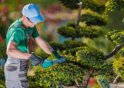 Daniel Leiritz Paysagiste - Taille et entretien arbres et arbustes ©Welcomia/Freepik