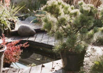 Daniel Leiritz Paysagiste - Pin terrasse bois et bassin ©Freepik