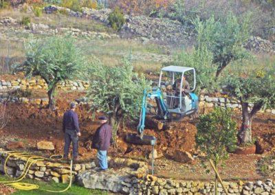Daniel Leiritz Paysagiste - Plantation d'oliviers